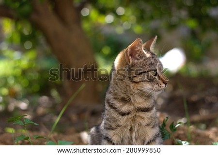 Brown tabby cat in the garden, head close-up. Selective focus. - stock photo