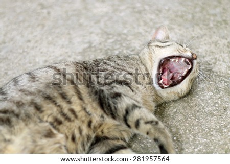 Brown tabby cat lying and yawning. Selective focus.  - stock photo