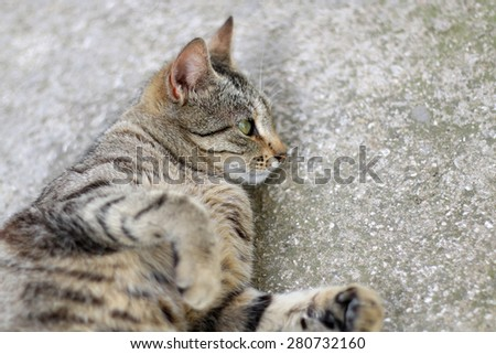 Brown tabby cat lying. Selective focus. - stock photo