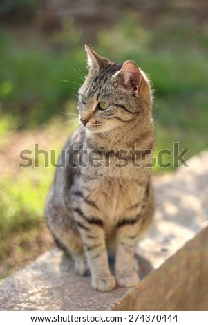 Brown tabby cat sitting in the garden, illuminated by warm sunset light. Vertical format, selective focus.  - stock photo