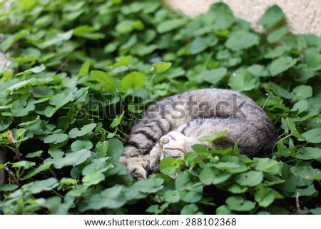 Brown tabby cat sleeping in the plants. Selective focus.