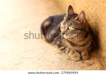 Brown tabby cat with beautiful big green eyes lying outdoor, sunbathing. Selective focus, copy space.  - stock photo