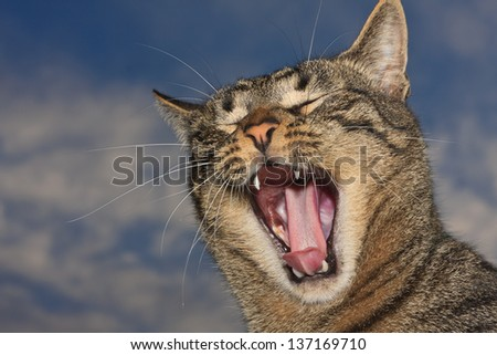 Brown tabby domestic cat yawning with a sky in the background - stock photo