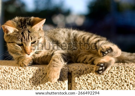 Brown tabby kitten lying on the wall outdoor, trying to sleep. Selective focus.