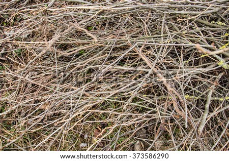 brown tree branch. Dry branch. Dead branches. tree branch of  big tree,  nature background. dry wood branch on ground. cut branches of fruit trees on the ground in the garden - stock photo