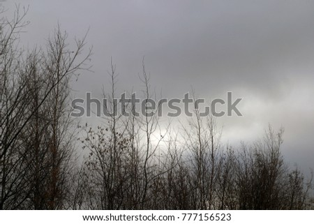 Brown tree branches against a gray, blue sky. Autumn and winter background