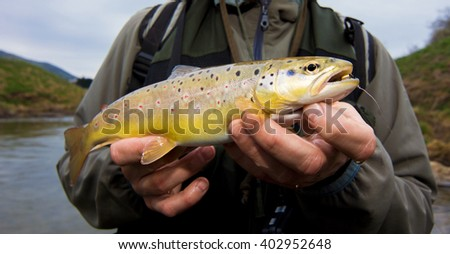 Brown Trout - stock photo