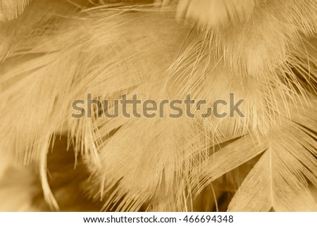 Brown vintage color trends feather texture background