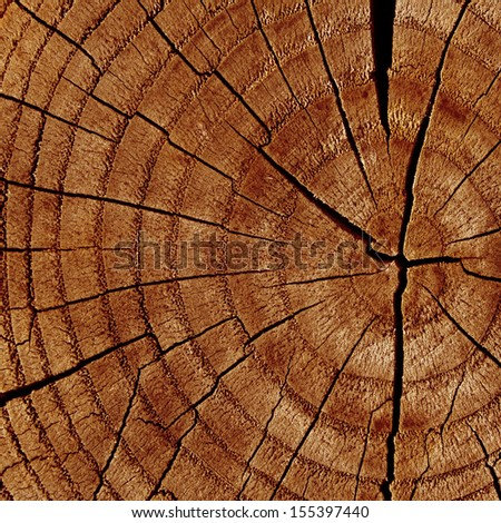 brown wood texture with some smooth lines in it - stock photo