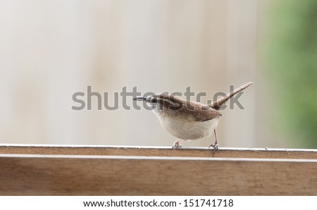 Brown Wren Perched on Wooden Rail - stock photo