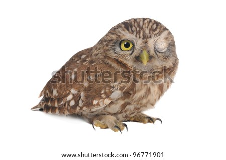 brownie  horned blinking owl on a white background - stock photo