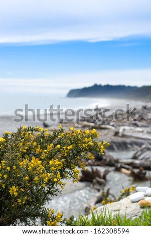 Bruce bay,Tasman Sea,South island, New Zealand - stock photo