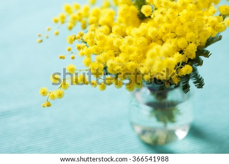 Brunches of beautiful Mimosa flower on cyan blue background