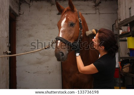 Brunette woman grooming brown horse for the riding in the stable - stock photo