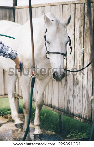 Brunette woman washing her beautiful white horse - stock photo