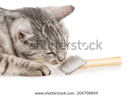 Brushes cat comb Isolated on white background - stock photo