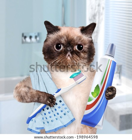 Brushing teeth cat. - stock photo