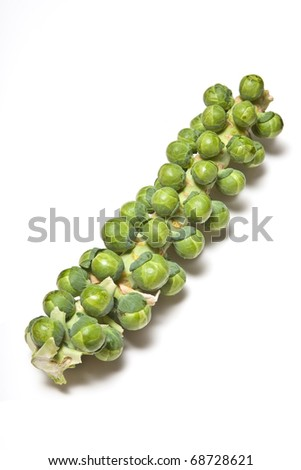 Brussel sprouts on the stalk cutout on a white studio background. - stock photo