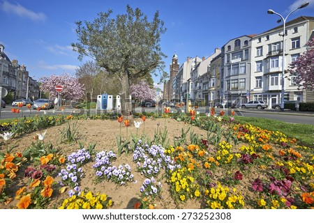 BRUSSELS; BELGIUM - APRIL 22; 2015: Olivier tree, flower bed and japanese cherry trees from the Square Riga at Schaerbeek in bloom during the springtime in Brussels; Belgium - stock photo