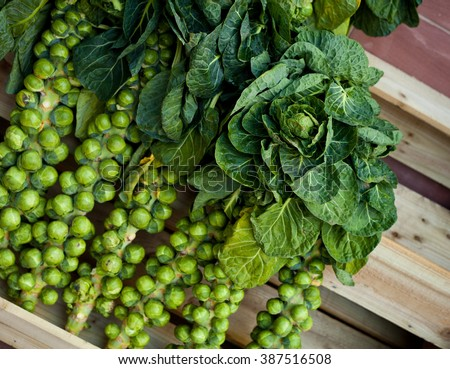 Brussel Sprouts Stock Images Royalty Free Images