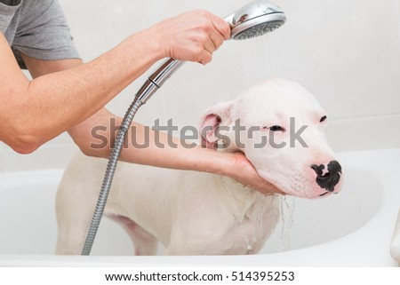 Bubble Bath a lovely dog dogo argentino
