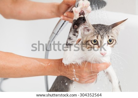 Bubble bath a small gray stray cat - stock photo
