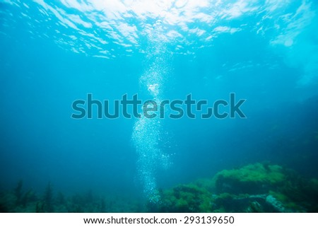 bubble under the sea
