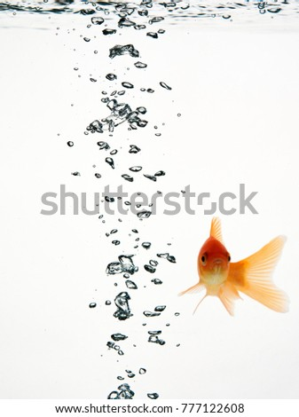 bubbles of oxygen in the water, with red fish