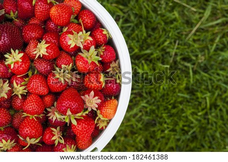 Bucket of freshly picked strawberries shot from above on green grass outside with copy space - stock photo