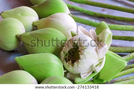 Bud green lotus, flower of buddhist - stock photo