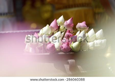 Bud lotus, flower of buddhist  - stock photo