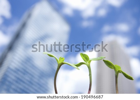 Bud of sunflower and high-rise buildings