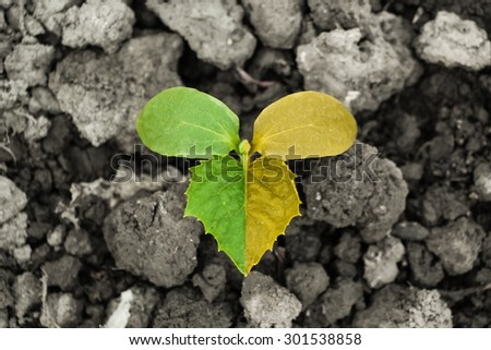 Bud with green half and another yellow half on the ground. - stock photo