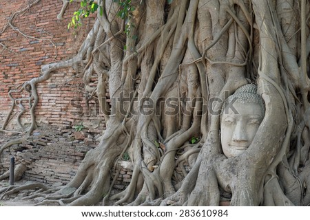 Buddha head encased in tree roots - stock photo