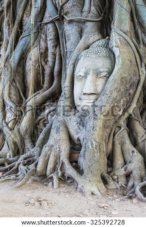 Buddha head in root tree at Wat Mahathat. Ayutthaya, Thailand - stock photo