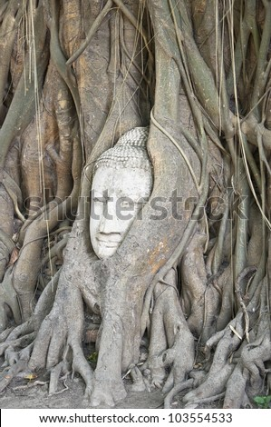 Buddha head in the roots of an overgrown fig tree in ayutthaya historical park thailand