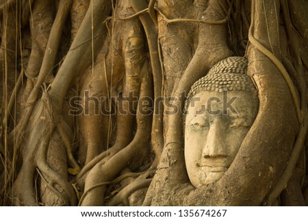Buddha Head in the roots of the tree, Ayutthaya, Thailand.