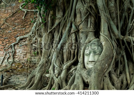 buddha head in the tree is landmark where tourist want to visit at ayutthaya