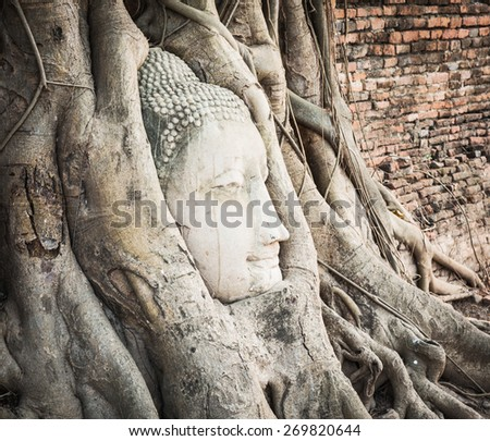 Buddha head overgrown by fig tree in Wat Mahathat. Ayutthaya historical park - stock photo
