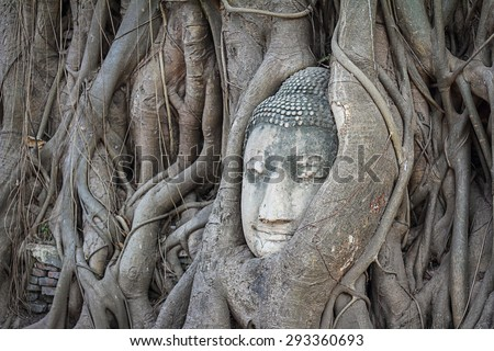 Buddha head statue in tree roots, Thailand