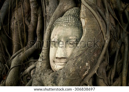Buddha heads in the tree root Wat Phra Sri Rattana Mahathat. Temple, Phitsanulok - North of Thailand,Public property,vintage style light