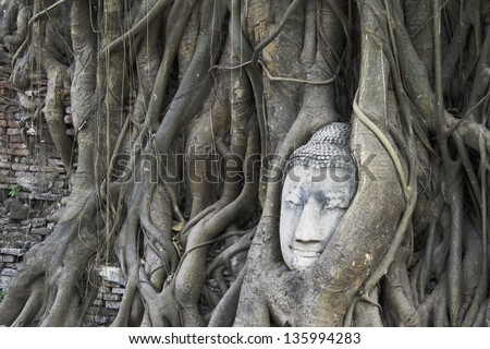 Buddha statue in the roots of tree  , Ayutthaya, Thailand