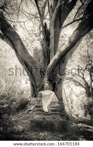 Buddha under the tree - stock photo