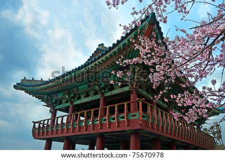 buddhist temple at Jeju Korea with sakura cherry blossoms - stock photo