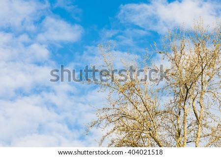 Budding almost bare tree against blue cloudy skies - stock photo