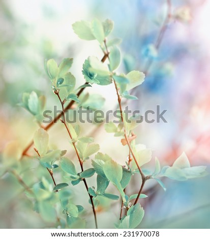Budding spring leaves  - stock photo