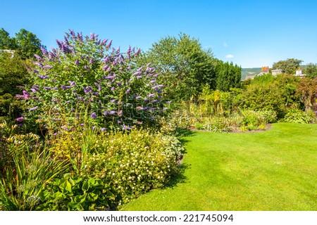 Buddleja davidii, Buddleia davidii, blooming in the garden - stock photo