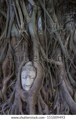 Budhas head gripped by boddhi tree roots in the ancient thai capital of ayutthaya