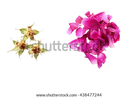 buds and petal sof rose.Concept.Isoalted - stock photo