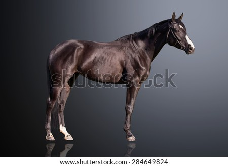 Budyonny horse, 3 years old, portrait standing against dark background - stock photo